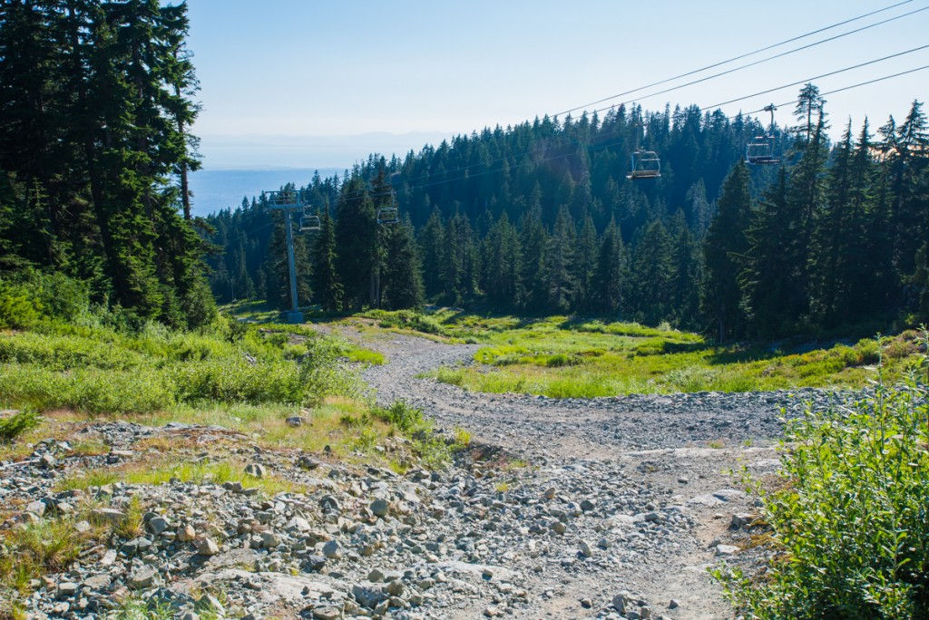 Mount Seymour Alpine Trail