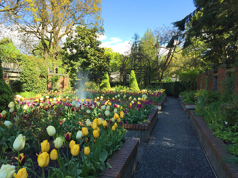 park and tilford gardens tulips