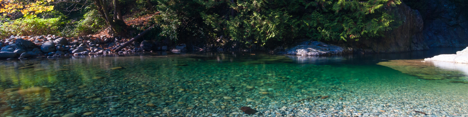 30 foot pool lynn canyon park suspension bridge in for 30 ft garden pool